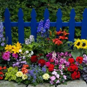 Яркие цветы на фоне синего заборчика