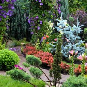Голубая елка на клумбе с цветами