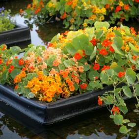 Цветочная композиция на поверхности воды