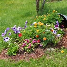 Простая клумба из однолетних цветов
