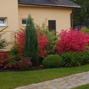 Бардовые листья на садовом кустарнике