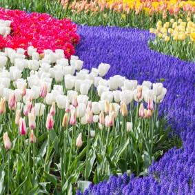 Белые тюльпаны на клумбе в парке