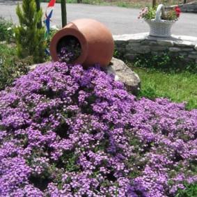 Мелкие цветки сиреневого оттенка