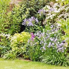 Садовый миксбордер с многолетними растениями