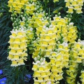 Высокие стрелки цветущих растений