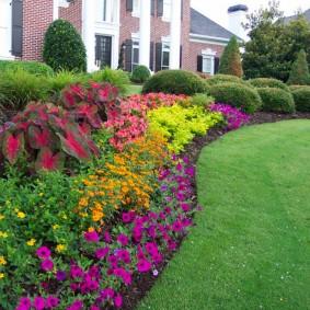Петуния и другие цветы на рабатке вдоль частного дома
