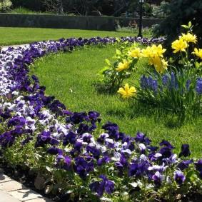 Темные цветки на растениях вдоль дорожки