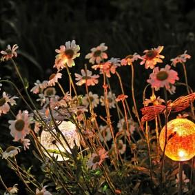 Шарообразные фонарики среди полевых цветов