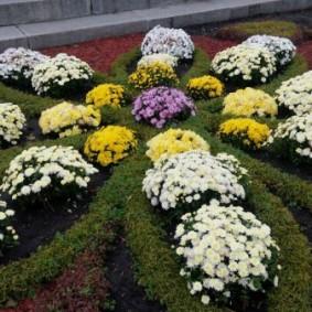 Цветочная композиция из низкорослых хризантем