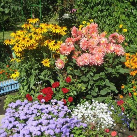 Высокорослые сорта многолетних хризантем