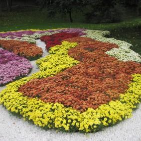 Садовая композиция из низких сортов хризантем