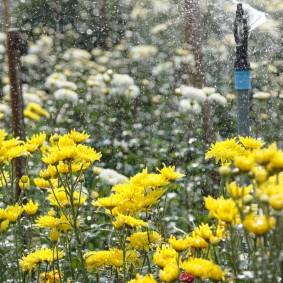 Желтые цветы в конце осени