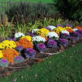 Рабатка с разнообразными цветами контрастных оттенков