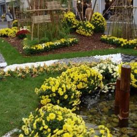 Желтые хризантемы в октябре на клумбе