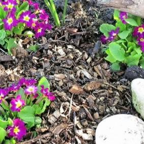 Мульчирование садовой клумбы растительными отходами