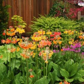 Многолетние цветы на клумбе вдоль забора