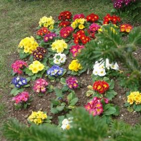 Цветочная композиция из низких многолетников
