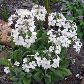 Белые цветы в ландшафтном дизайне
