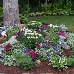 Садовая клумба с теневыносливыми цветами