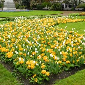 Желтые и белые цветы на клумбе посередине газона