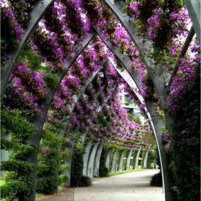 Деревянная арка с цветущими вьюнами