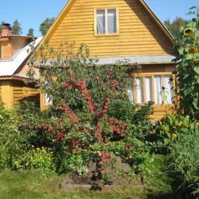 Красные плоды на яблоне небольшой высоты