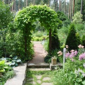 Зонирование сада аркой с девичьим виноградом