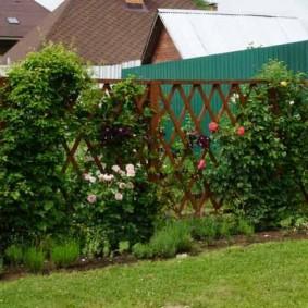 Плетистые розы на деревянной перголе