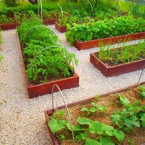Огурцы и помидоры на высоких грядках