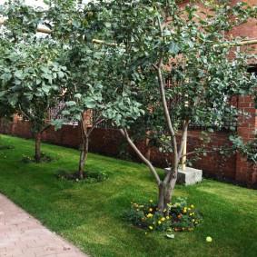 Высокие яблони вдоль кирпичного забора