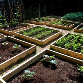 Прямоугольные грядки на ухоженном огороде