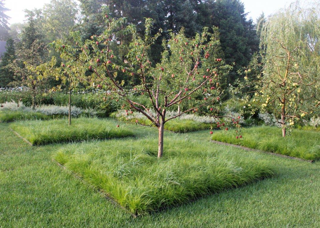 как правильно посадить фруктовый сад фото прошла врачей