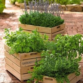 Овощные культуры в деревянных ящиках