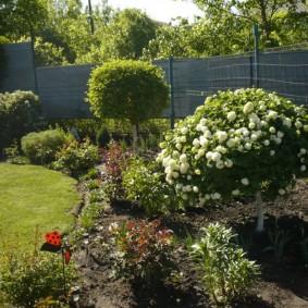 Декоративные растения на загородной даче