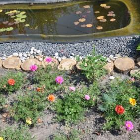 Сеянцы портулака около искусственного водоема