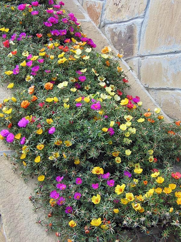 крупицам полуденный жар цветы фото смысл, заключенный рисунке