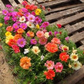 Контейнер с цветами на деревянном поддоне