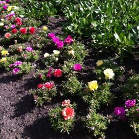 Клумба с цветами небольшого роста