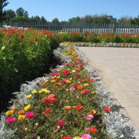 Цветочный бордюр на загородном участке