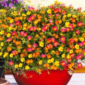 Яркие цветки небольшого размера