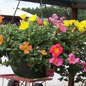 Кашпо с цветами на открытой террасе