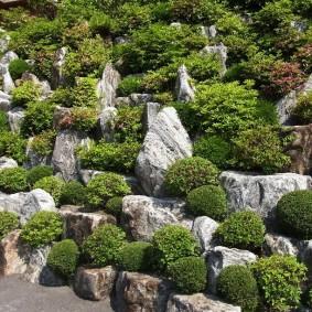 Каменистый склон с невысокими растениями