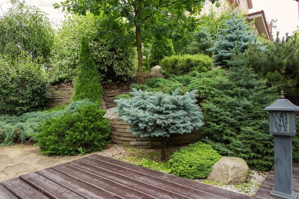 Хвойные растения на склоне садового участка