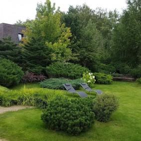 хвойные растения для сада фото декор