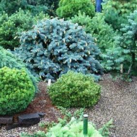хвойные растения для сада декор идеи