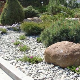 хвойные растения для сада варианты идеи