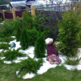 хвойные растения для сада виды идеи