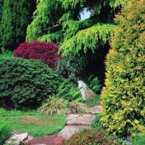 хвойные растения для сада идеи фото