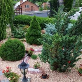 хвойные растения для сада варианты фото