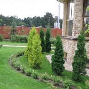 хвойные растения для сада фото дизайна